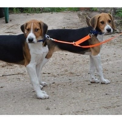 Hound Coupling leads