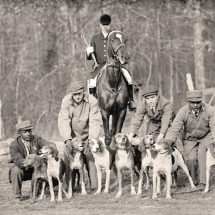 hunting-hounds-with